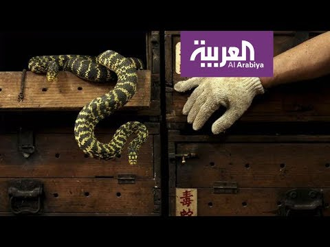 أبحاث علمية تتوصل لعلاج لدغات الثعابين السامة