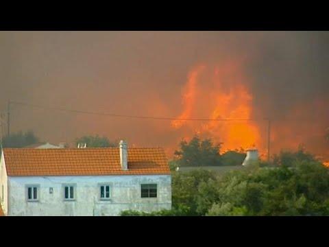 شاهد نيران الحر تحرق غابات البرتقال وألف من رجال الإطفاء يحاولون إخمادها