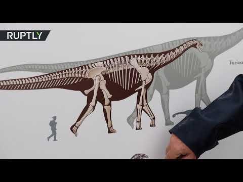 لحظة العثور على عظم يبلغ طوله مترين لفخذ ديناصور