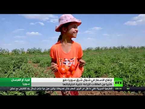 شاهد سكان شمال شرق سورية يلجأون إلى الزراعة لتأمين احتياجاتهم الغذائية