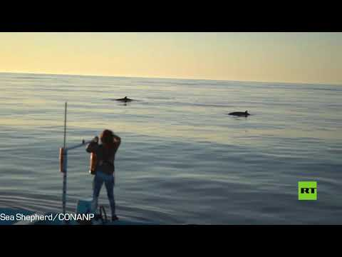 شاهد اكتشاف فصيلة جديدة من الحيتان قبالة سواحل المكسيك