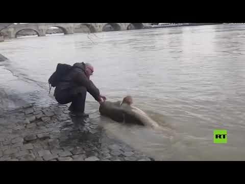 شاهد اصطياد سمكة عملاقة في نهر السين وسط باريس